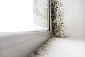 плесень на пластиковом окне